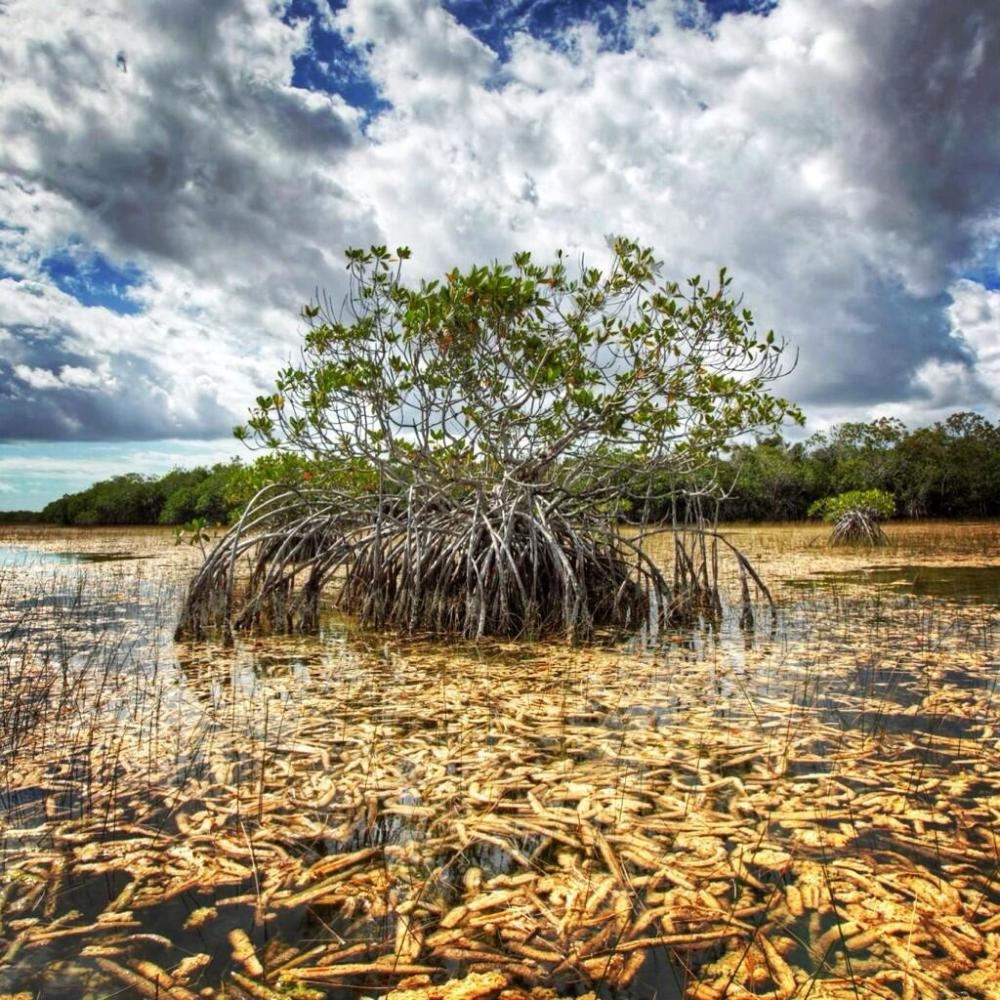 Everglades National Park. Tweeted by the US Department of the Interior 3/15/14.