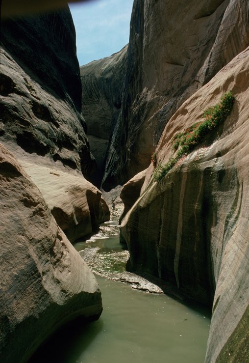 Hall's Creek Narrows. From the Park's website.