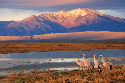 Sandhill cranes west of the Dunes. NPS Photo, from the Park's Flickr stream.
