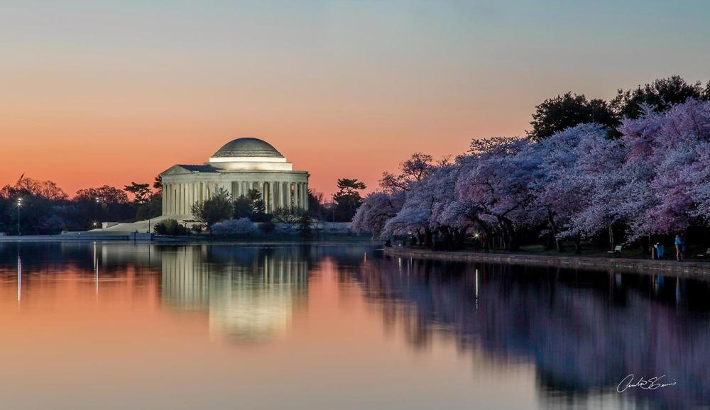 Cherry Blossoms are almost in full bloom on the National Mall and Memorial Parks in Washington, DC. This weekend will be the perfect time to check them out! Photo: Andrew S. Geraci. Posted on Tumblr by the US Department of the Interior, 4/10/14.