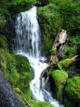 Mt Rainier NP 14