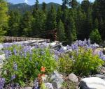 Mt Rainier NP 19