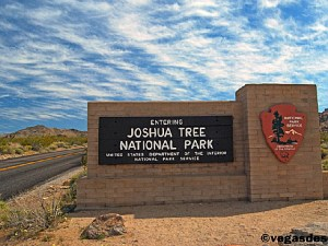 Joshua Tree NP 00