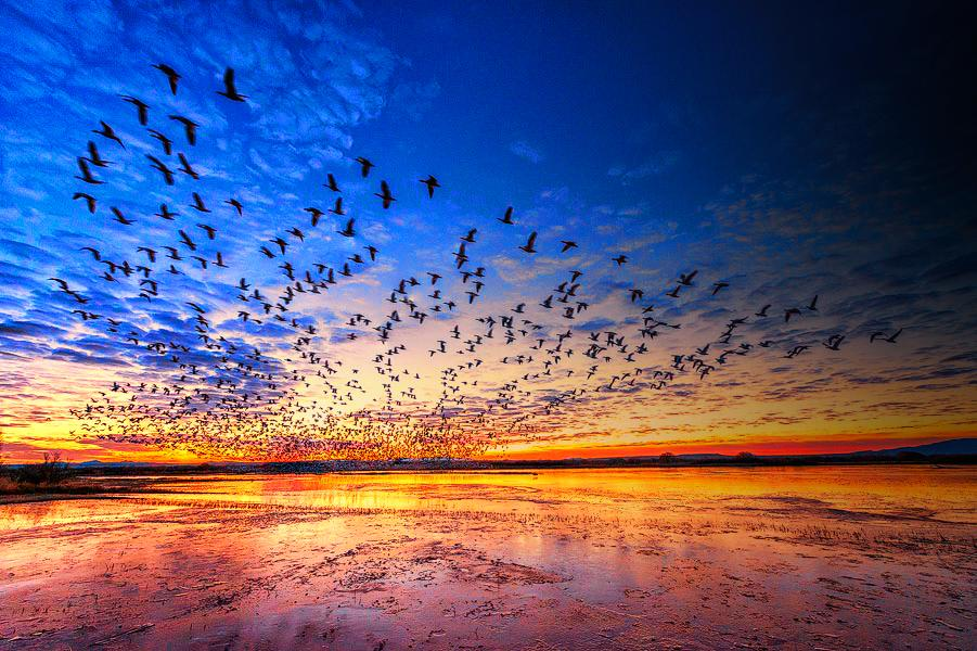 Early morning take off over New Mexico's Bosque del Apache Natl Wildlife Refuge. Tweeted by the US Department of the Interior, 8/5/14.