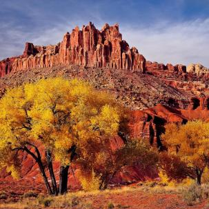 Utah's Capitol Reef National Park, in the heart of red rock country, shows other colors in the fall. Pictured here are cottonwood trees in front of the Castle in Capitol Reef. Photo by Glenn Nagel. Tweeted by the US Department of the Interior, 10/2/14.