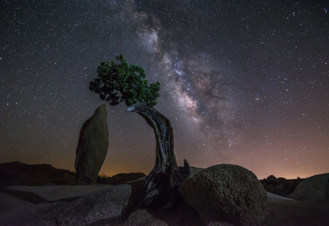 An amazing view of the night sky is one of the many reasons to visit Joshua Tree National Park in California. Juan Moreno took this stunning pic of the Milky Way sparkling above the Juniper Tree near Jumbo Rocks Campground — one of the most photographed trees in the park. Photo courtesy of Juan Moreno. Posted on Tumblr by the US Departmetn of the Interior, 3/9/15.