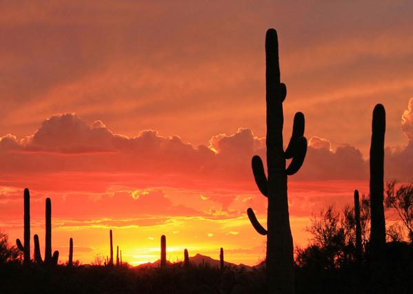 Sunset at Saguaro National Park. Tweeted by the US Department of the Interior, 7/15/15.