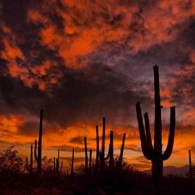 Nothing compares to the beauty of a desert sunset. Saguaro National Park. Photo by Greg McCown. Posted on Tumblr by the US Department of the Interior, 8/29/15.