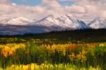 Denali NP 33 – fall colors
