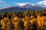 Rocky Mountain NP – Aspens