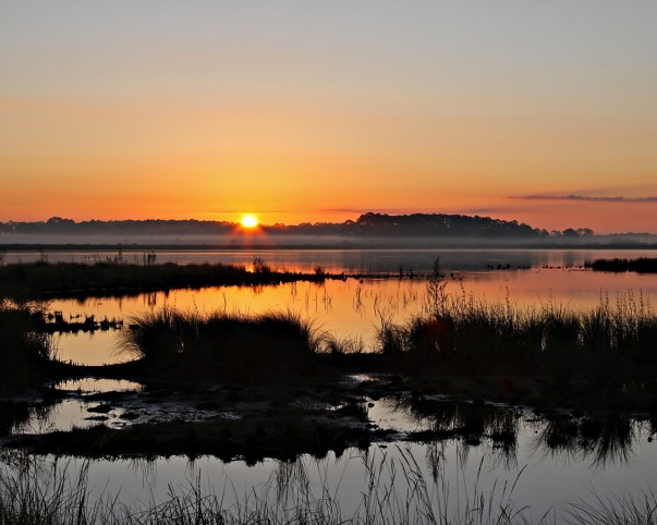 When the sun rises over St. Marks National Wildlife Refuge in October, it is greeted by autumn wildflowers, migrating butterflies and a great variety of birds. Northern harriers hunt over the refuge marshes, careful to avoid the alligators. It is a beautiful and peaceful place, found on the border of fresh and saltwater marshes in northern Florida. Photo by Betsy Kellenberger. Posted on Tumblr by the US Department of the Interior, 10/29/15.