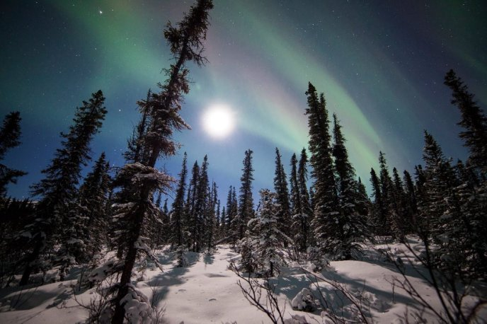 The Northern Lights and snow in Denali National Park. Tweeted by the US Department of the Interior, 1/28/16.