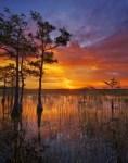 Everglades NP 31 – color