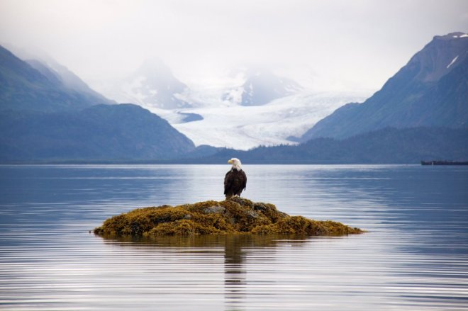 This bald eagle knew it was posing, right? Alaska's Glacier Bay National Park. Photo by Stewart Brackett. Tweeted by the US Department of the Interior, 3/9/16.