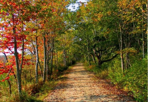 Named for the world-renowned environmentalist, Rachel Carson National Wildlife Refuge in Maine is a great place to find peace and connect with nature on a quiet stroll, catching glimpses of bird and bunnies in the woods and on the beach. Open in all seasons, the refuge is always welcoming. Photo from the US Department of the Interior's blog.