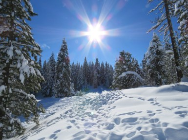 A sunburst illuminates trees heavy with snow at Table Mountain Winter Play Area outside of Ashland, Oregon. Photo by Joel Brumm, Bureau of Land Management - Oregon. Posted on Tumblr by the US Department of the Interior, 2/23/16.