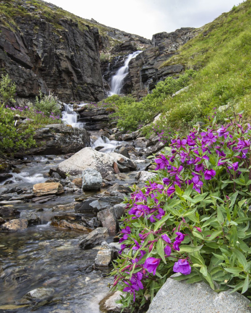 The spring beauty of Wrangell-St. Elias National Park in Alaska. Hike through stunning scenes of wildflowers and waterfalls, climb mountain peaks and glaciers or kayak along 155 miles of breathtaking coastline. The nation's largest national park – bigger than the states of Vermont, New Hampshire and Rhode Island combined – offers many ways to explore, from backpacking, fishing, river trips, biking and more! Photo by Jacob Frank, National Park Service. Posted on Tumblr by the US Department of the Interior, 5/20/16.