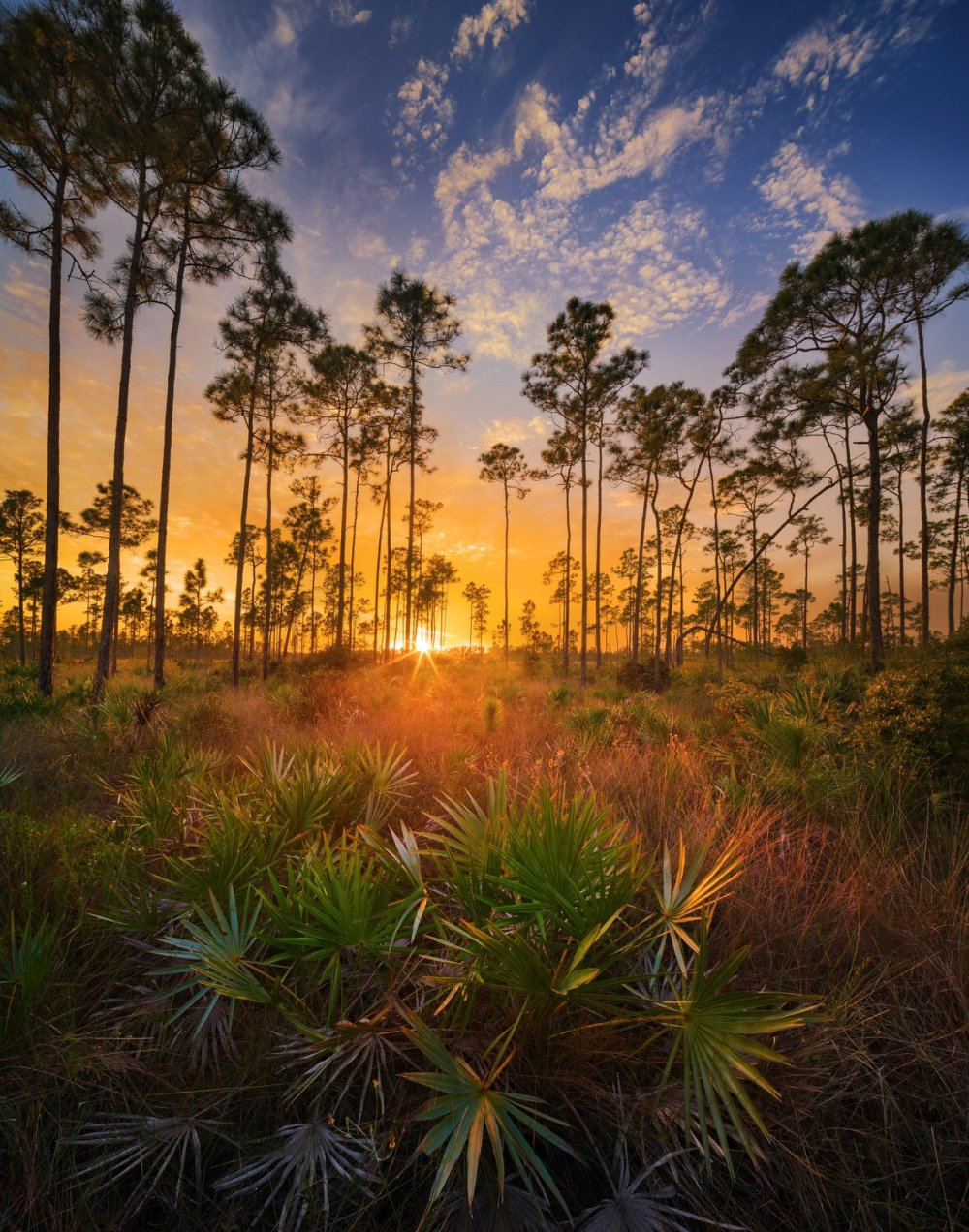 This epic sunset picture of Everglades National Park is 1 of 16 new stamps celebrating the National Park Service. Photo by Paul Marcellini. Tweeted by the US Department of the Interior, 6/6/16.