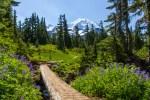 Mount Rainier NP 42