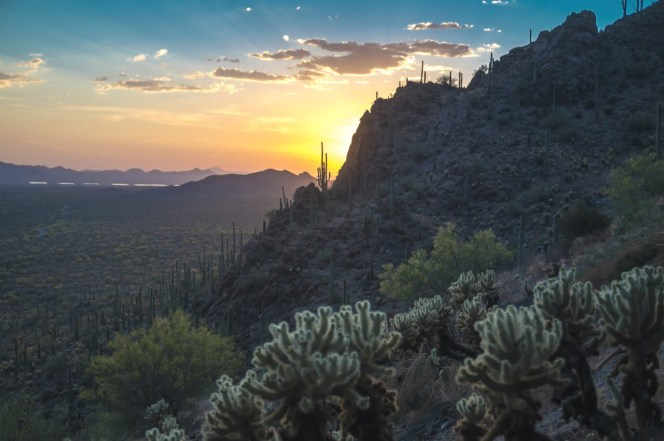 The giant saguaro is a symbol of the American west. These majestic plants, found only in a small portion of the United States, are protected by Saguaro National Park in Arizona. Here you have a chance to see these enormous cacti, silhouetted by the beauty of a magnificent desert sunset. Photo by Eileen Mattil. Posted on Tumblr by the US Department of the Interior, 7/5/16.