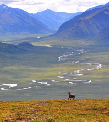 A stream in Gates of the Arctic National Park. Tweeted by the US Department of the Interior, 10/17/16.