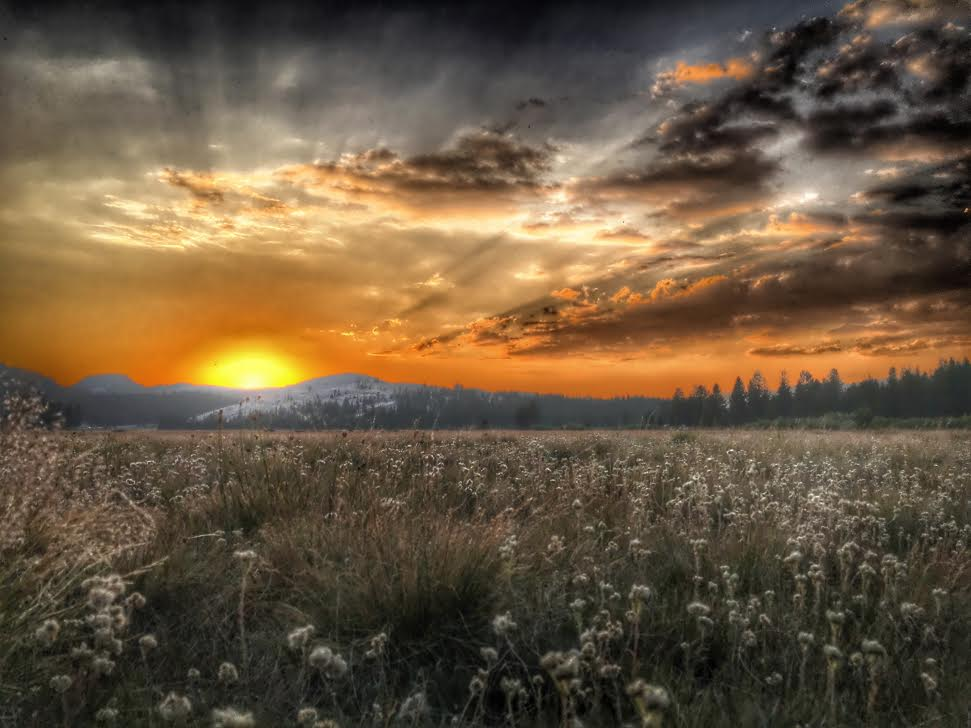 """With a little planning, you can capture some amazing moments at national parks. After checking the weather, Eric Neitzel drove 3 hours to Tuolumne Meadows – the one place in California's Yosemite National Park that's flat enough for the perfect sunset. Braving the mosquitoes, he carefully laid down on the meadow grass to try and make sure the beautiful flowers of the meadow were shown as well as the the sunset and Pothole Dome. """"For me, laying in the flowers of Tuolumne Meadows taking this picture made me feel like half John Muir and half Ansel Adams."""" iPhone photo by Eric Neitzel. Posted on Tumblr by the US Department of the Interior, 10/16/16."""