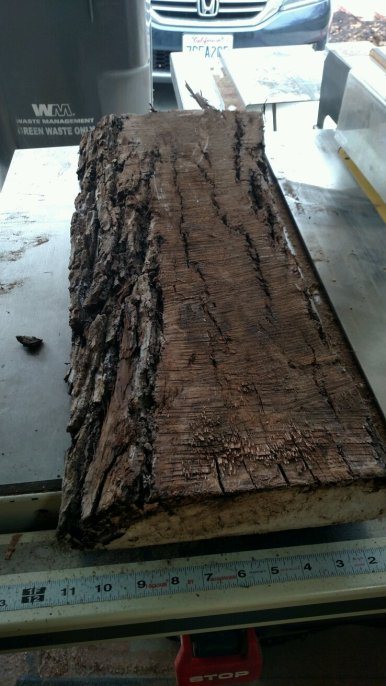 rough-walnut-06
