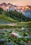 Mt Rainier NP 41