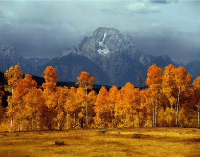 Mt. Moran, 12605', 4th highest peak in the Teton Range, Grand Teton National Park, WY. The Skillet Glacier descends on the east face, seen here, with aspens in autumn in the foreground, as storm clouds gather in the distance. Grand Teton National Park is a must-see in the fall! Aspen tree leaves blaze mostly yellow and orange (and occasionally red) shades during autumn, creating a dramatic contrasting with the towering Teton Range in the background. Photo courtesy of Ed Cooper. Posted on Tumblr by the US Department of the Interior, 10/17/15.