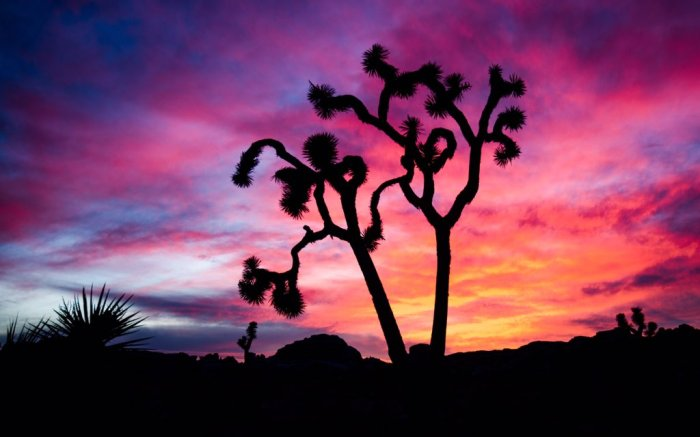Sunset over California's Joshua Tree National Park. Photo by Danner Bradshaw. Tweeted by the US Department of the Interioir, 1/31/17.
