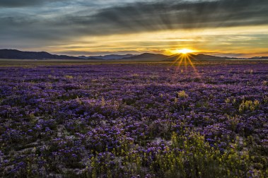 Only a few hours from Los Angeles, Carrizo Plain National Monument offers visitors a chance to be alone with nature. Prominent features of the monument include the white alkali flats of Soda Lake, vast open grasslands and a broad plain rimmed by mountains. When conditions are right, numerous wildflowers can carpet the valley floor, creating a beautiful, but temporary landscape of color. Photo by Curtis Kautzer. Posted on Tumblr by the US Department of the Interior, 3/20/17.