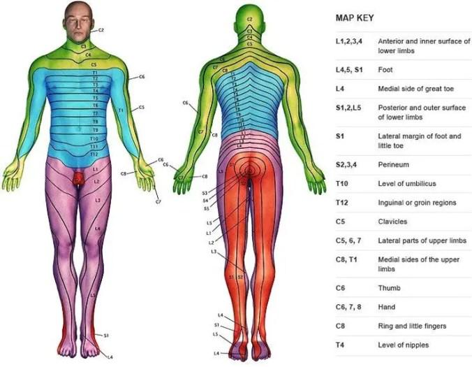 ef7647ceae98d10588f14b4ecd7e6a89--medical-science-medical-school.jpg