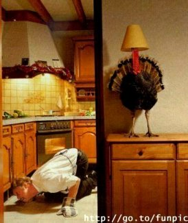 funny-turkey