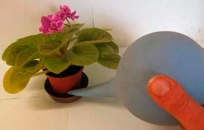 Polir-ibolya-in-raklap-fotó