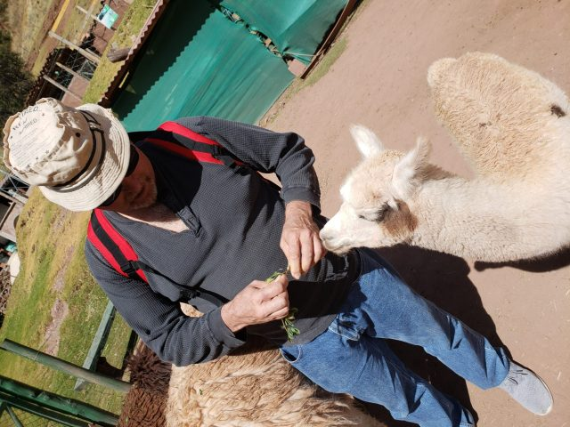 What's a Llama? Bucket List Feeding Llamas in Peru! 6 20190528 121139