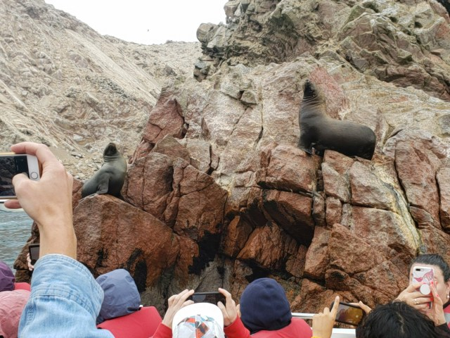 Observing sea lions from the boat on the Ballastas Islands Tour