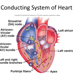 conduction system of the heart  [ 1100 x 825 Pixel ]