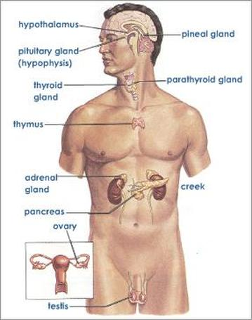 Picture also all categories the human body rh mpanaphy weebly