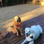 pet friendly secured yard
