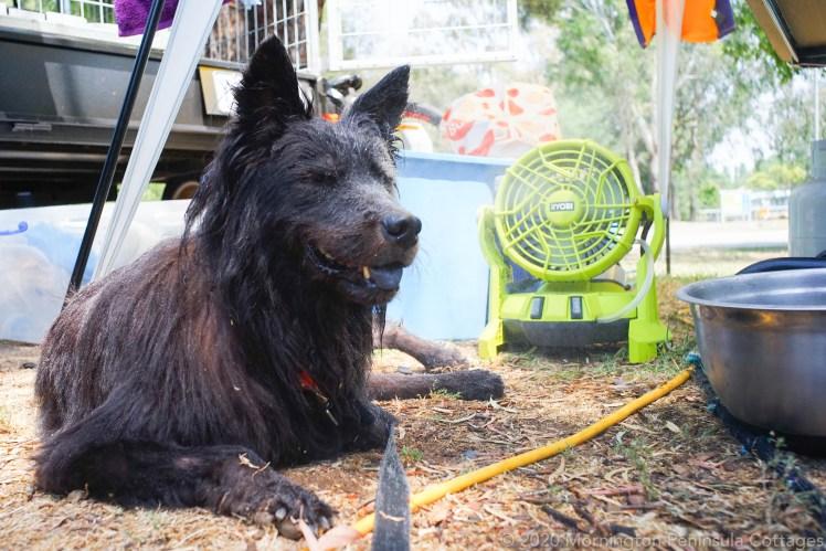 dog enjoying a misting fan