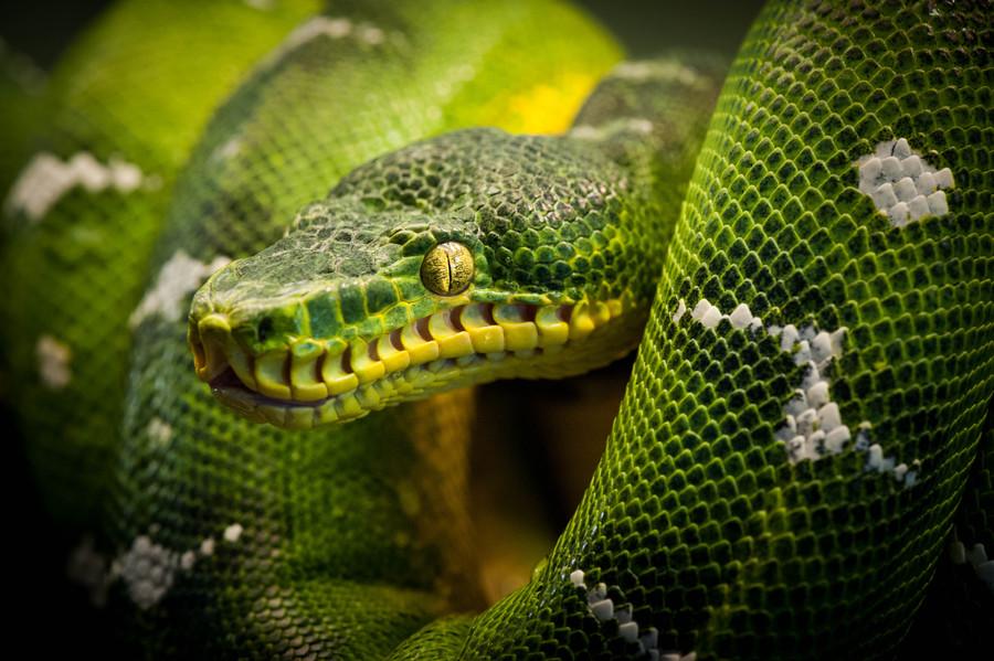 Green Animal Wallpaper Eye Mark S Photo Odyssey