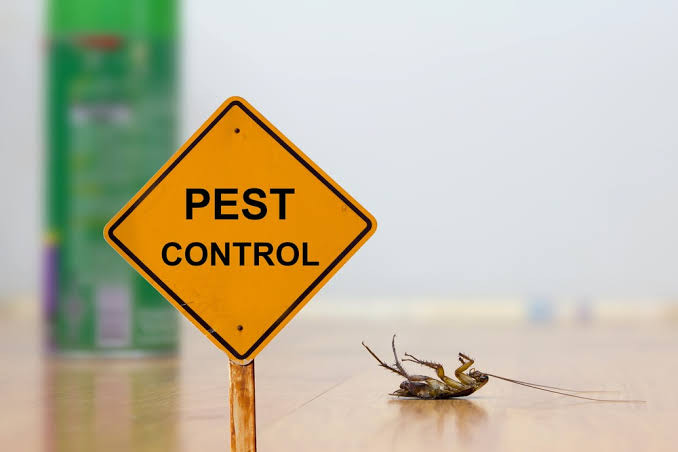 How To Start Your Own Pest Control Business In Kenya