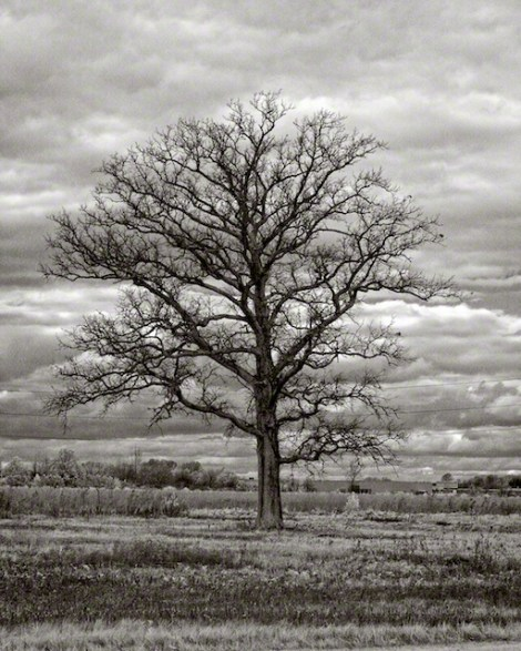 """Old Tree"" by Aaron Sheldon. Shot with IR-converted Canon 50D."