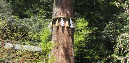 shinto-tree