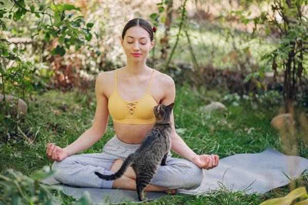 Cat Yoga : du yoga et des chats