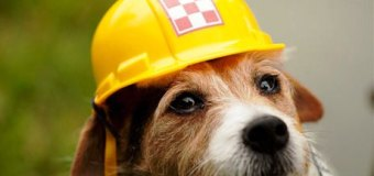 Виагра для собак скоро появится в США!