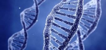 ДНК 1 клетки человека вмещает 1,5 гигабайта информации – лучший винчестер на планете