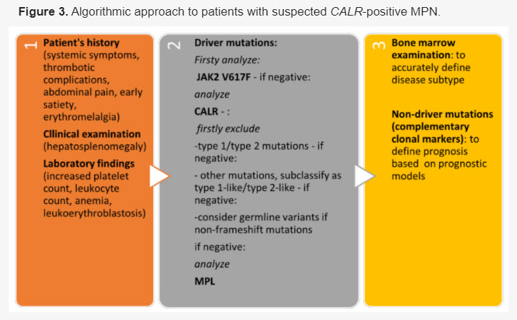 Algorithmic approach to patients with suspected CALR-positive MPN