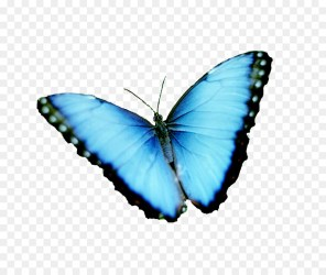 Transparent Background Butterfly Clipart 4
