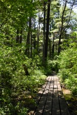 The Swamp Path